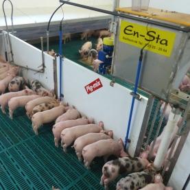 Pig-Mix Ferkelfuetterung 1