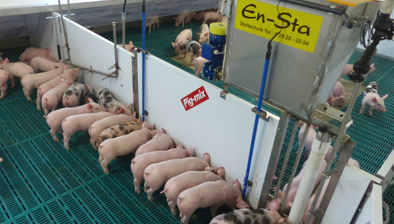 Pig-Mix-Ferkelfuetterung-1