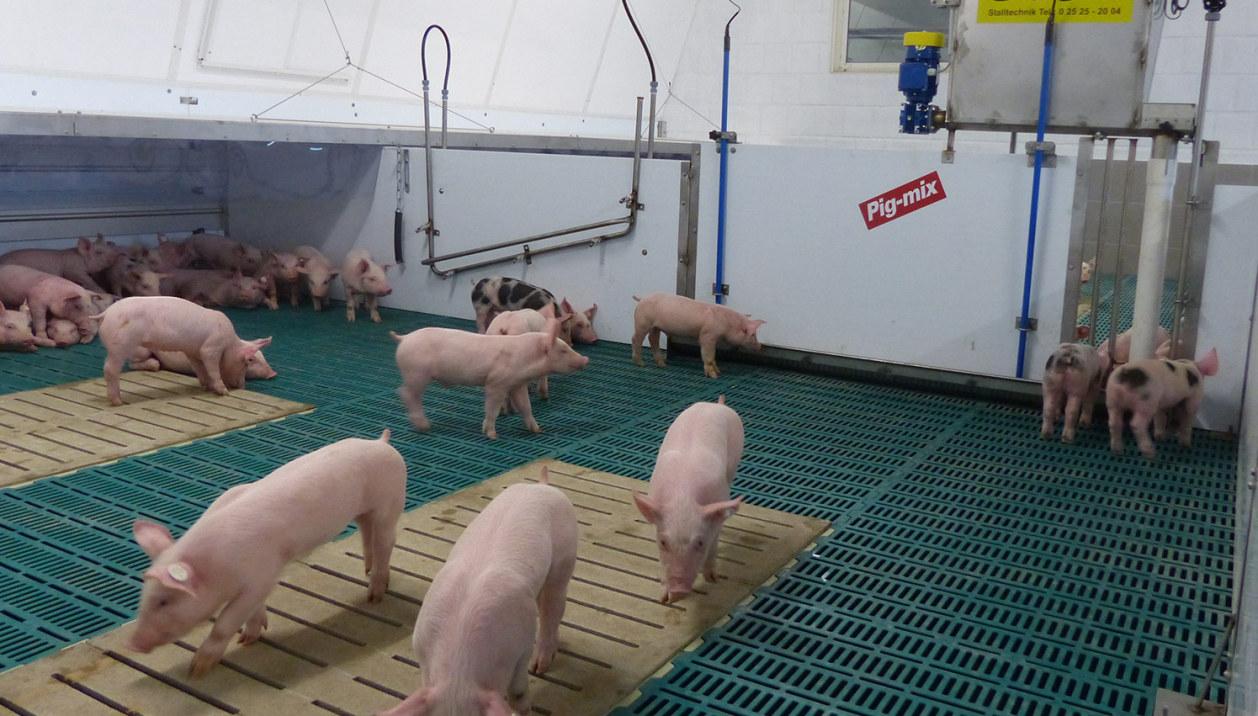 Pig-Mix-Ferkelfuetterung-3-1